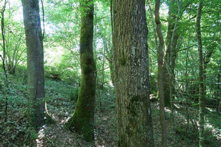Sanction de 200 000 € pour Forest Invest.